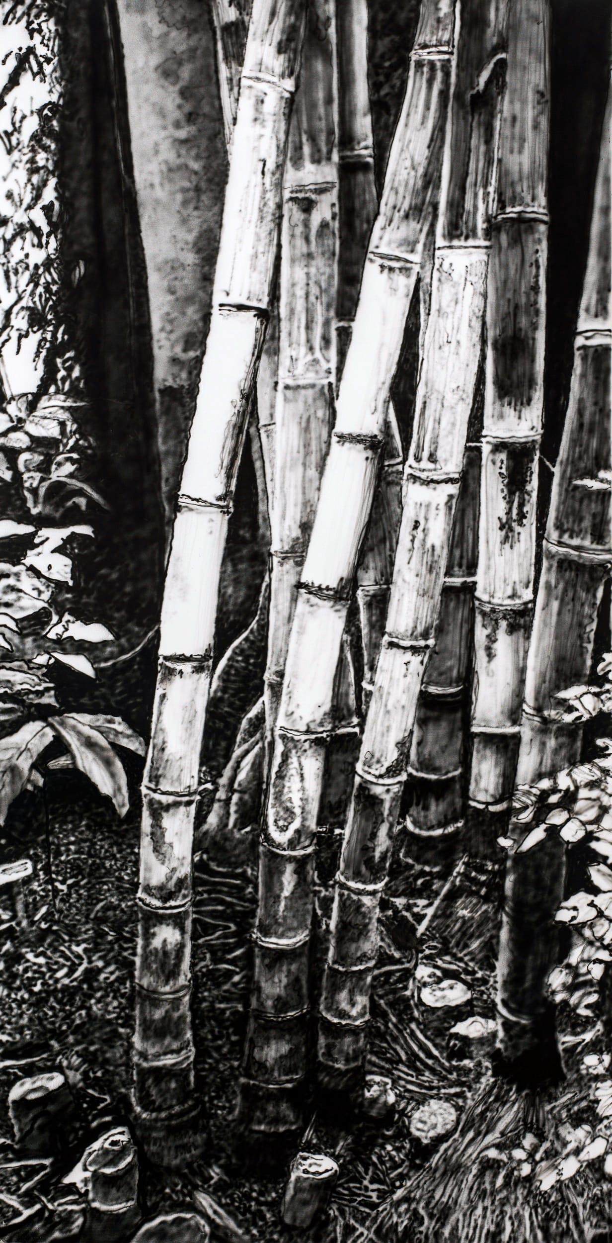 Bamboos. Oil on canvas, 80 x 160 cm, 2019