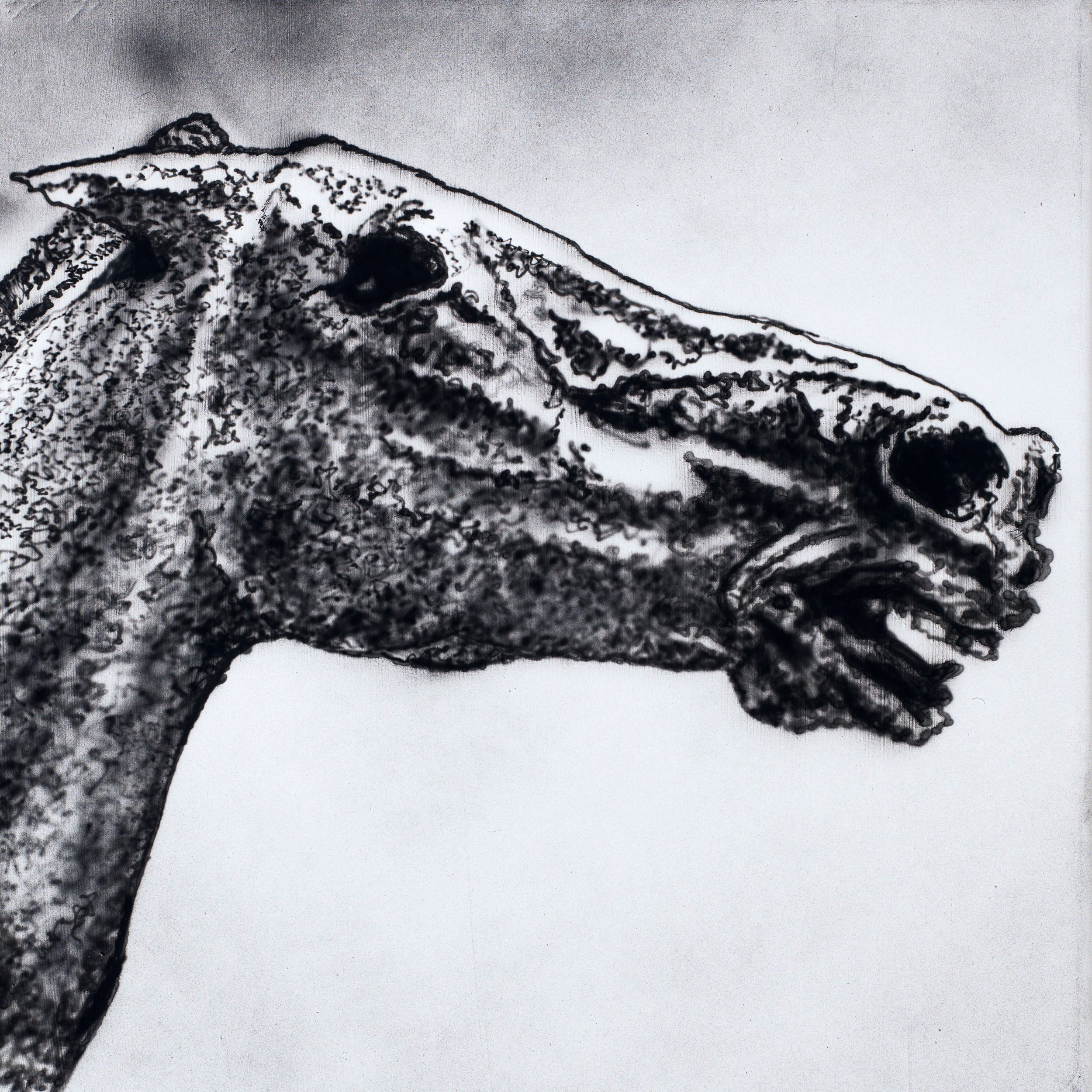 Horse head. Oil on canvas, 50 x 50 cm, 2019