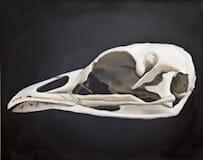 Tetrao Urogallus. Oil on canvas, 100 x 80 cm, 2014