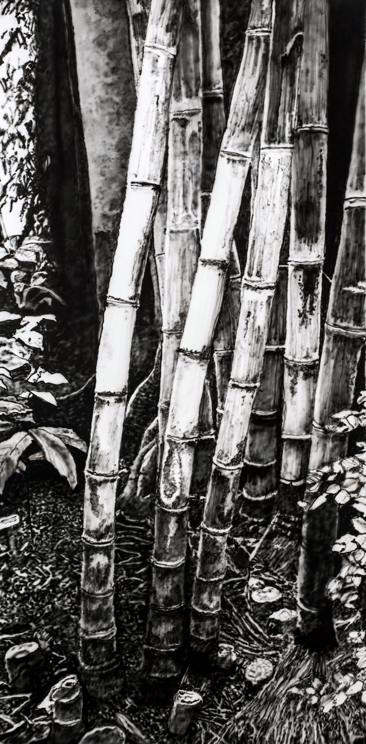 Bamboos. Oil on canvas, 80 x 160 cm, 2019