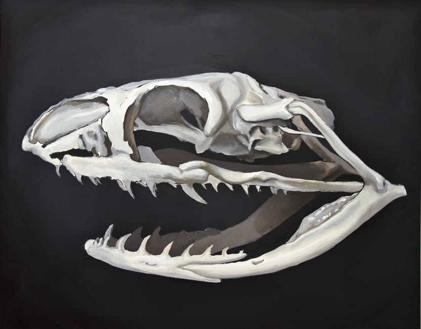 Leioheterodon Madagascariensis. Oil on canvas, 100 x 80 cm, 2014